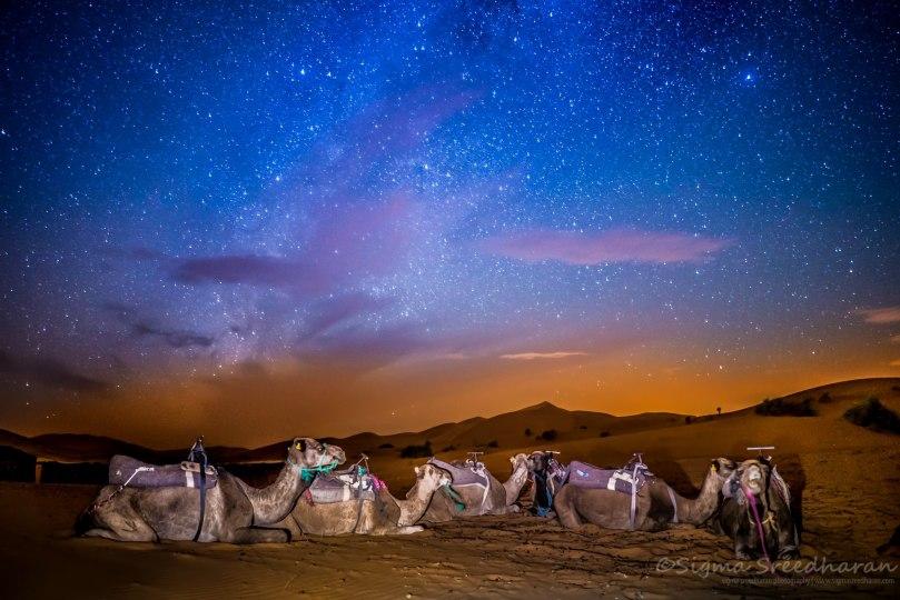 camel-sky