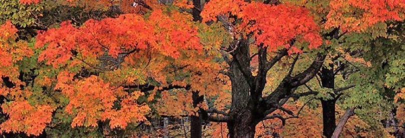 TN-fall