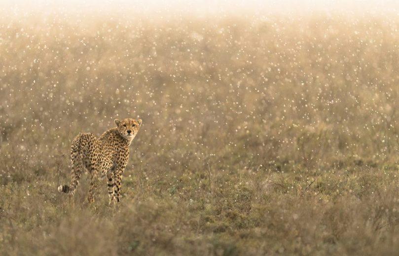 shower_NgorongoroCrater_Tanzania